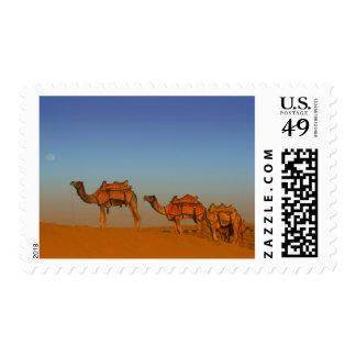 Thar desert, Rajasthan India. Camels along the Postage Stamp