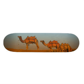 Thar desert, Rajasthan India. Camels along the Skateboard