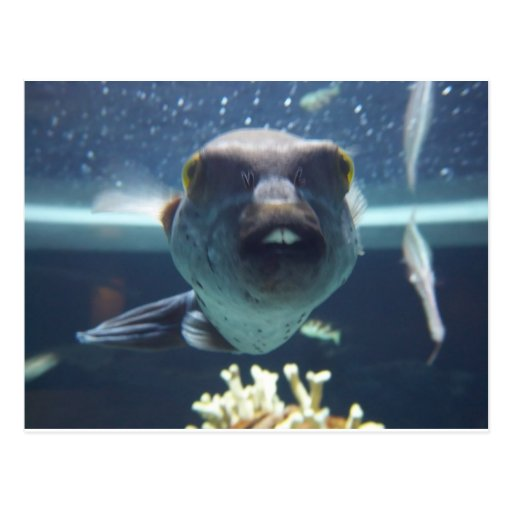 That bucktooth fish postcard zazzle for Take me fishing org