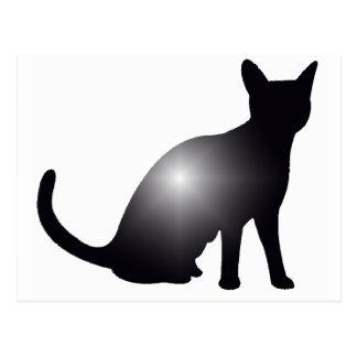 That Cat Shine Postcard