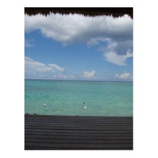 Thatched Cabana postcard