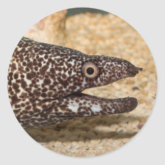That's a Moray! Classic Round Sticker