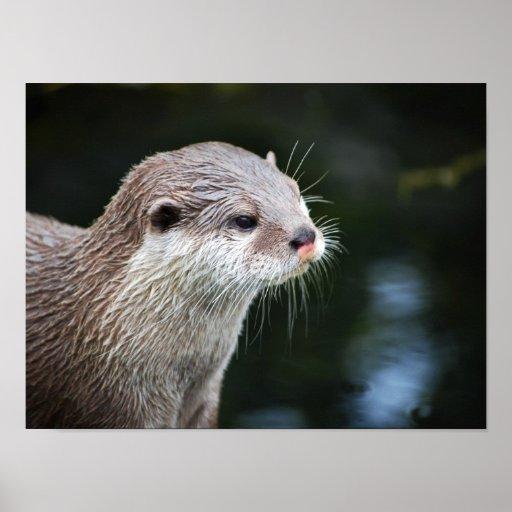 That's Otter Nonsense. Poster