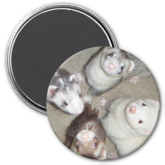 The 4 Musketeer Ferrets! 3 Inch Round Magnet