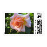 The Absolutely Rose Stamp