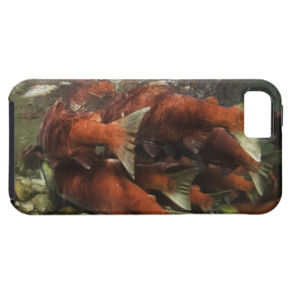 The Adams River sockeye run is one of the iPhone 5 Case