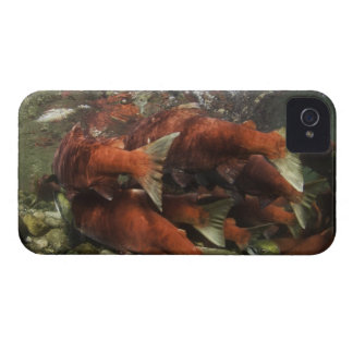 The Adams River sockeye run is one of the iPhone 4 Case