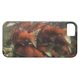 The Adams River sockeye run is one of the iPhone SE/5/5s Case
