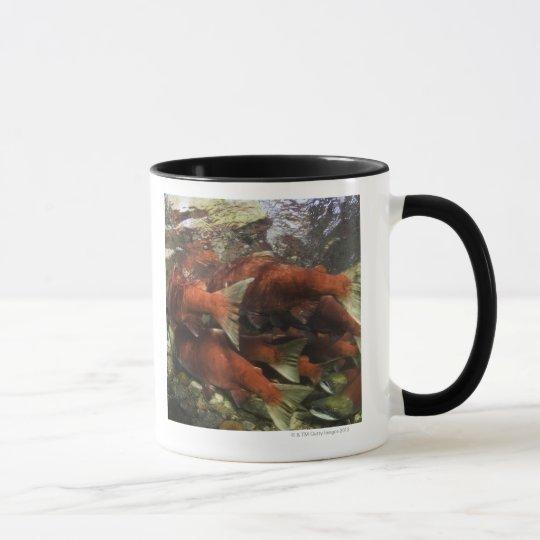 The Adams River sockeye run is one of the Mug