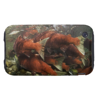 The Adams River sockeye run is one of the Tough iPhone 3 Covers