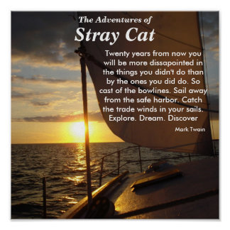 The Adventures of, Stray Cat Poster Explore Dream