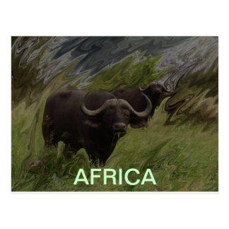 The African Buffalo Postcard