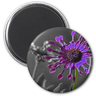The African Daisy 2 Inch Round Magnet