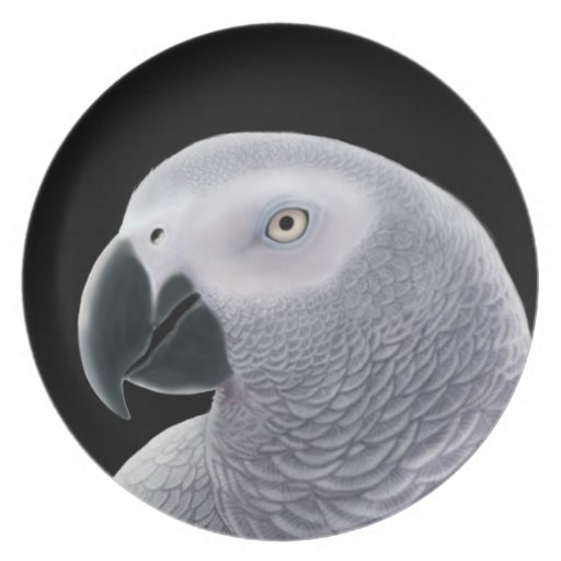 The African Gray Parrot Plate