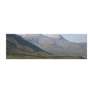 The Alaska Pipeline Canvas Stretched Canvas Print