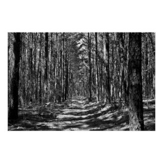 The Alley Through the Pine Sentinels B&W Poster