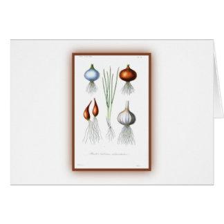 The Allium Family Card