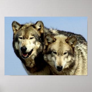 The Alpha Wolf Couple Print