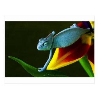 The Amazing Chameleon Postcard