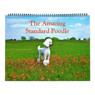 The Amazing Standard Poodle 2016 Calendar