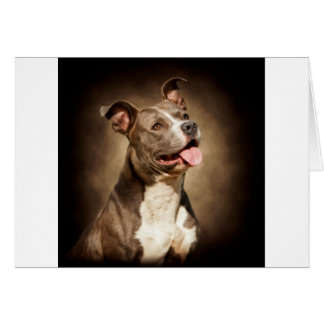 The American Blue Pit-Bull Card