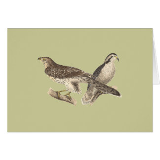 The American Goshawk Astur atricapillus Greeting Card