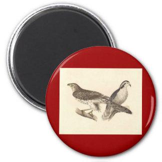 The American Goshawk (Astur atricapillus) Magnet
