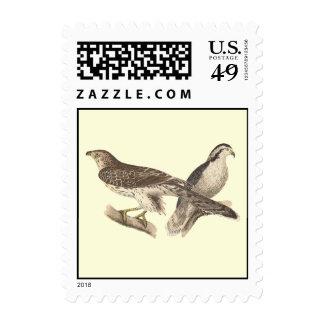 The American Goshawk (Astur atricapillus) Postage Stamps