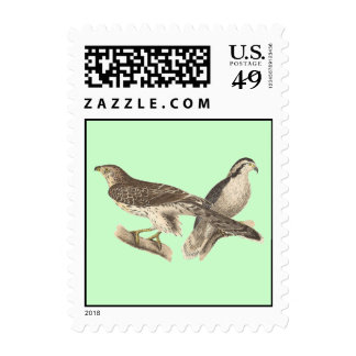 The American Goshawk (Astur atricapillus) Stamp