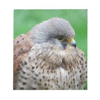 The American kestrel hawk Note Pads