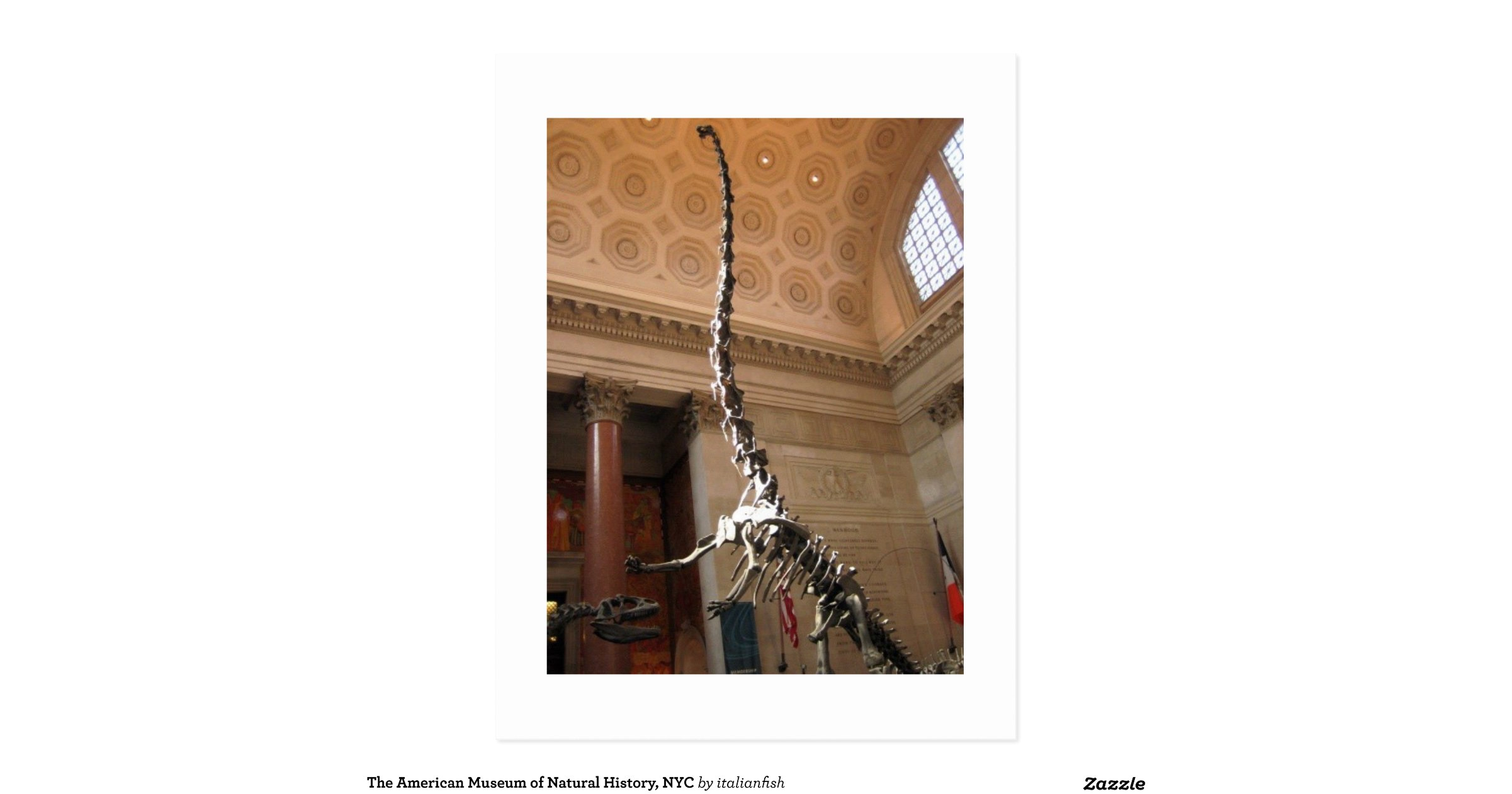 American Museum Of Natural History Postcards