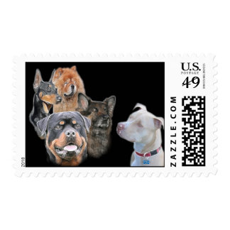 The American Pitbull Terrier Dog Postage Stamp