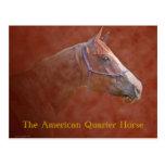The American Quarter Horse Postcard