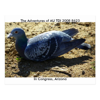 The American Racing Pigeon Union Postcard