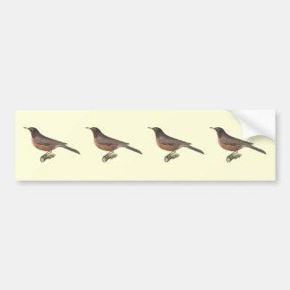 The American Robin(Merula migratoria) Bumper Sticker