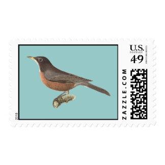 The American Robin(Merula migratoria) Stamp