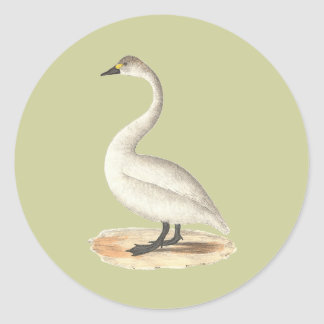 The American Swan(Cygnus americanus) Round Stickers