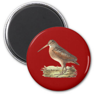 The American Woodcock(Rusticola minor) 2 Inch Round Magnet