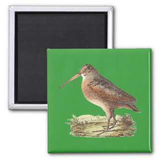The American Woodcock(Rusticola minor) 2 Inch Square Magnet