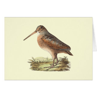 The American Woodcock(Rusticola minor) Card