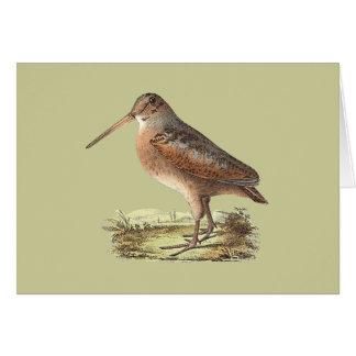 The American Woodcock(Rusticola minor) Greeting Card