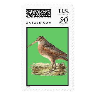 The American Woodcock(Rusticola minor) Postage