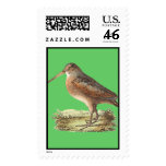 The American Woodcock	(Rusticola minor) Stamp