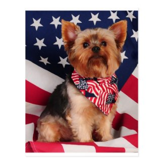The American Yorkie Postcard