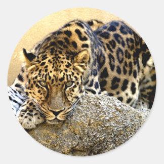 The Amur Leopard Classic Round Sticker