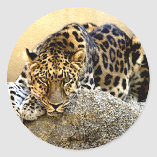 The Amur Leopard Classic Round Sticker