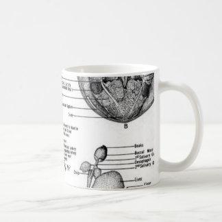 The Anatomy of an Oct8pus Classic White Coffee Mug