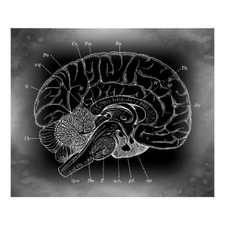 THE ANCIENT MYSTERIOUS BRAIN POSTER