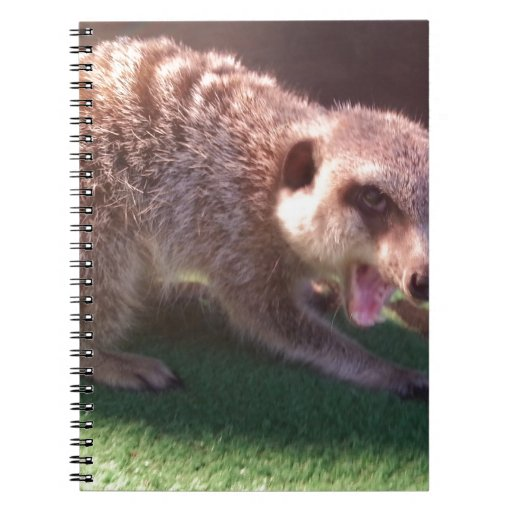 The Angry Meerkat Notebooks