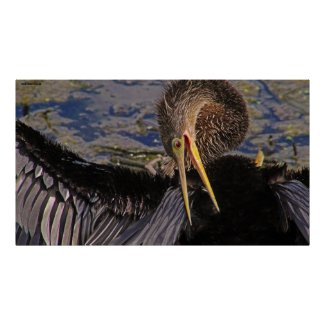 The Anhinga Grooms Poster